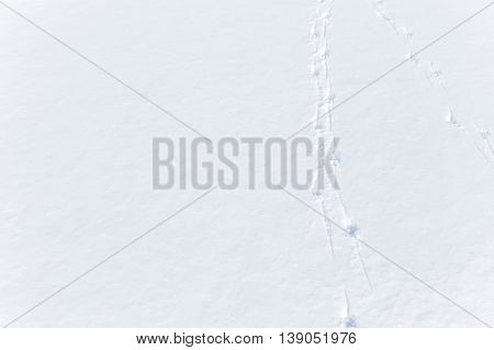 bird tracks in the snow. bird footprints on clean white snow. empty space for your text