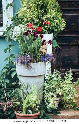 conteainer flowers