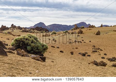 Arid igneous landscape with sparse greenery Teide National park Tenerife Spain
