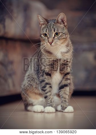 The striped cat with white paws sits on a floor.