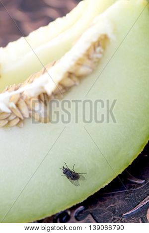 picture of a fresh melon seeds macro shot