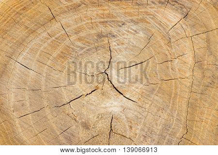 Natural background - cross section of tree trunk