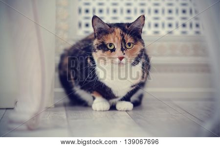 The domestic multi-colored cat with white paws on a floor