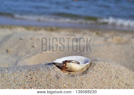 Gold ring in a shell on the beach