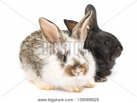 animals, baby little rabbits on white background