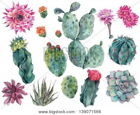 Set of watercolor cactus, succulent, flowers, twigs, isolated watercolor illustration on white Natural watercolor summer design floral elements, botanical collection in boho style