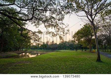 Central Public Park Green Grass Meadow With Tree Sunset