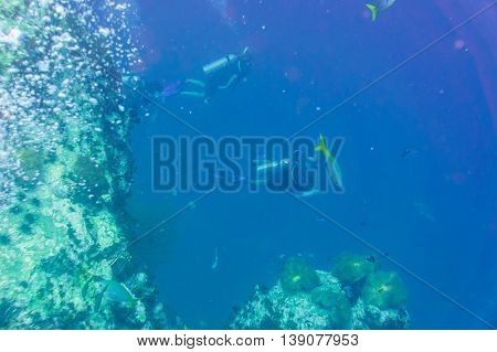 Scuba Diving Trainning On A Coral Reef