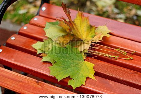 Part of the wooden benches in the Park on which lay a small bouquet of autumn maple leaves.
