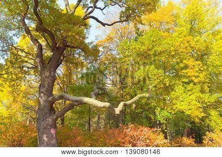 Trees of Yellow Sunlit Foliage