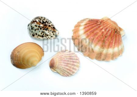 Various Seashells