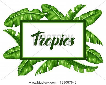 Frame with banana leaves. Image of decorative tropical foliage.