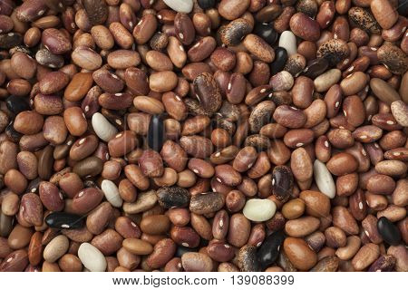 Dried pebble beans full frame
