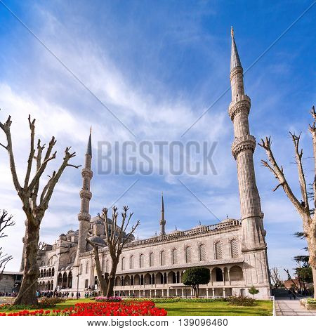 View of the Blue Mosque from the park in Istanbul. Sultanahmet Camii. Travel Turkey. The Muslim religion.
