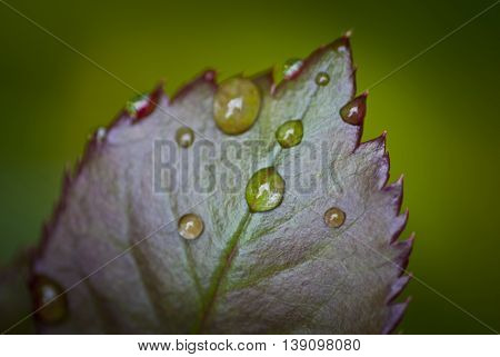 A Leaf with dew drops close up
