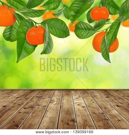 Mandarine tree with wooden planks on green nature background.