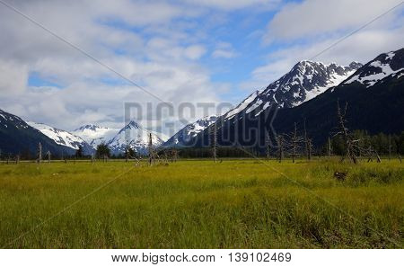 Panoramic view of snowcapped mountains and lush green field in Alaska