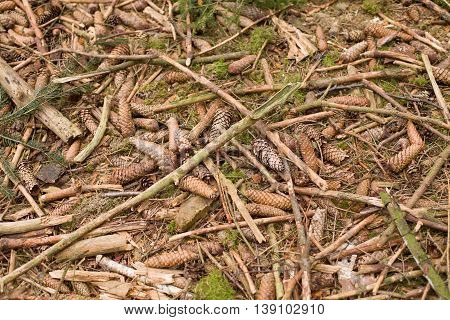 Ground closeup view natural background. Forest ground texture. wood chip abstract background texture