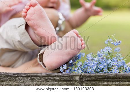 Bare feet of a cute baby on the wooden background. Forget me not and a child. Childhood in the farm. Retro style image of infant and flowers.Small bare feet of a little baby girl.