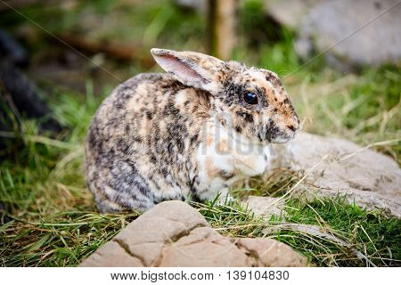 Rabbit Sitting In The Green Grass