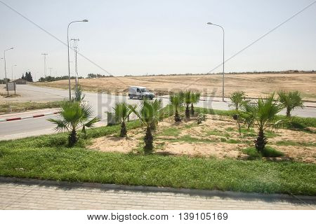 A crossroad on tunisian street decorated with young palm trees.
