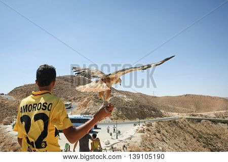 MATMATA TUNISIA - SEPTEMBER 17 2012 : A rear view of a Tunisian man holding a hawk for photographing with tourists at a tourist stop in Matmata with a view of rocky desert in Matmata Tunisia.