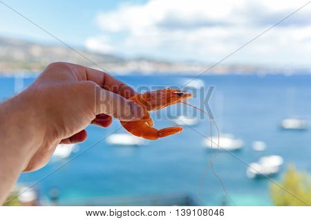 A hand holding a shrimp against the background of the bay with silhouettes of yachts, Shrimp in hand