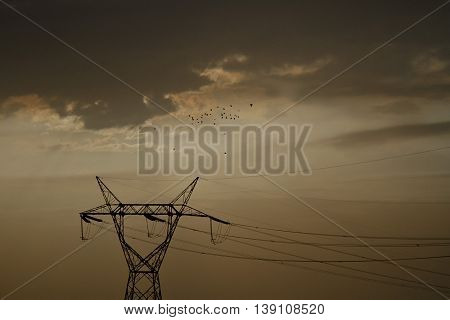 Migration of crows above an alone electricity pole in the clouds