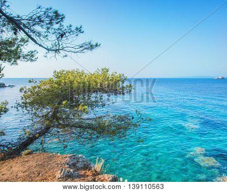 Crustal clear water in sea with mediterranea tree
