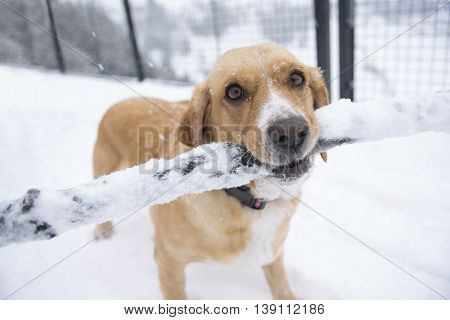A Dog with piece wood in winter