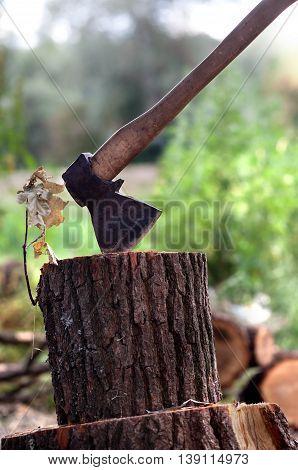Axe in oak stump in forest .
