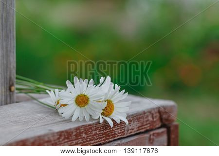 Bouquet Of Daisies Lying On A Wooden