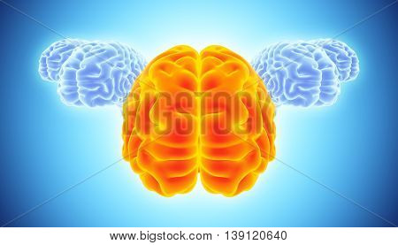 3D Illustration Of Conceptual Bright Orange And Blue Brain.