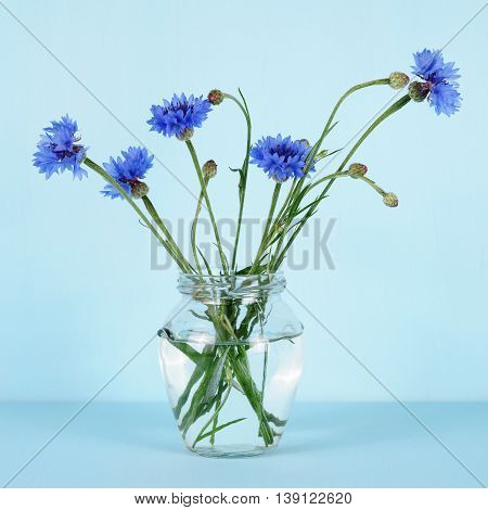 Cornflowers in glass jar on turquoise background
