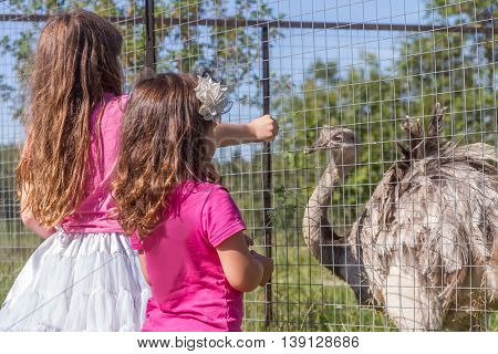 young happy smiling child girls feeding emu ostrich on bird farm, outdoor portrait