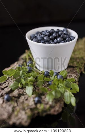 Blueberry in white bowl on bark with moss, stay on bark of moss