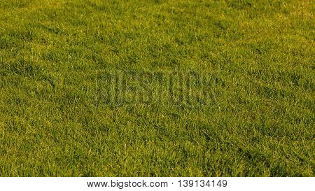 Nature foliage outdoor concept. Green lawn in sunlight. Grass growing in summer.