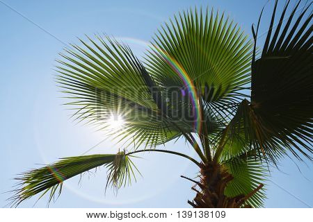 Green palm leaves on a clear blue sky. The sun and rays. Nature tropical countries. Art processing of photos. Painted rainbow