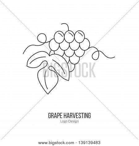Grapes with leaf. Single logo in modern thin line style isolated on white background. Outline winery symbol. Simple mono linear pictogram. Stroke vector logotype template.