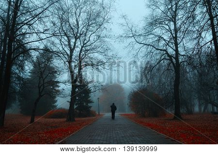 Autumn nature -foggy autumn view. Autumn alley in dense fog with lone passerby- foggy autumn landscape with autumn trees and red fallen leaves. Autumn alley in dense autumn fog. Soft focus applied.