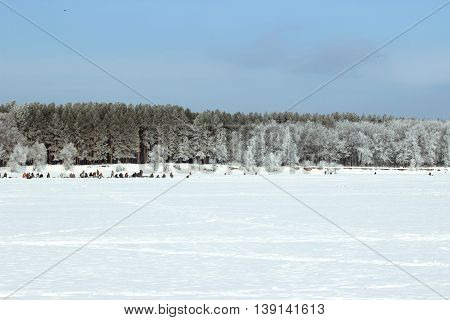 A group of fishermen catch fish in winter on a clear cold day on the frozen river on the background of trees covered with frost