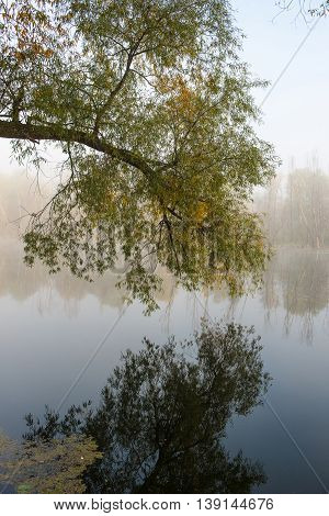 tree bent over the water surface of the river