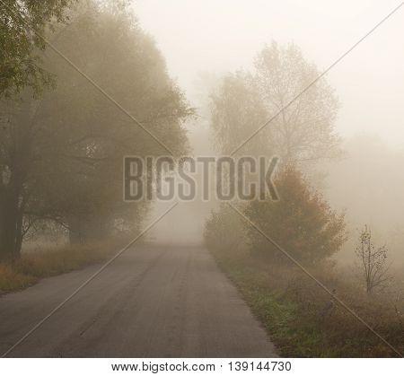 asphalt road in the fog autumn seson
