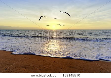 Ocean sunset birds is a group of birds in flight and a journey towrads freedom and the light.