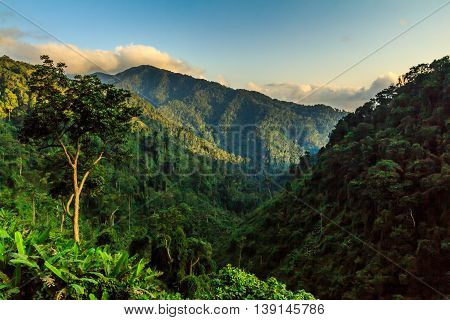 Late afternoon light illuminates a tree and the green mountains of Vietnam