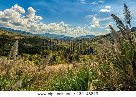 Tall grass, green hills, and mountains in the countryside of Vietnam