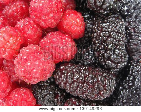 Red raspberry and dark mulberry laid in the form of Yin Yang. Healthy food.