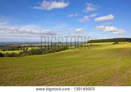 Hay Field In The Yorkshire Wolds
