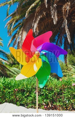 Pinwheels On The Beach under the Palm tree, Sunshine Concept