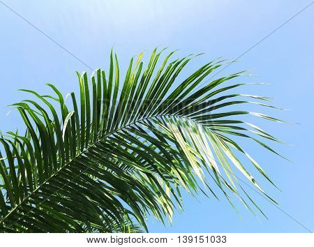 palm leaf on bright blue sky background